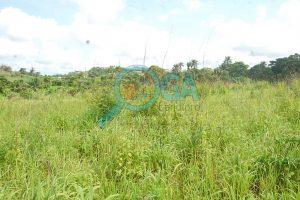 Lands for sale at Oke Mosan, near Abeokuta Golf Club, Ogun State 2